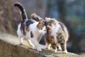 Två katter på en stenmur
